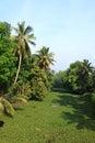Backwaters of Kerala Royalty Free Stock Image