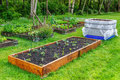 Backyard gardening raised beds in a vegetable community garden Royalty Free Stock Images
