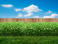 Backyard in summer Royalty Free Stock Photo