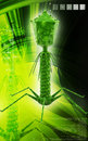 Bacteria phage digital illustration of in colour background Royalty Free Stock Photo