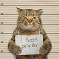 Bad Cat Hates People