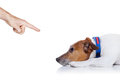 Bad dog behavior being punished by owner with finger pointing at him isolated on white background Royalty Free Stock Photography