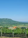 Badacsony lake balaton hungary vineyard of with in background Royalty Free Stock Photo