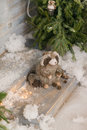 Badger at the Christmas tree in the snow Royalty Free Stock Photo