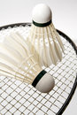 Badminton shuttlecocks on the racket Stock Images