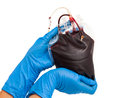 Bag of blood in the hands of a nurse on white background Stock Photography