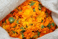 A bag with calendula Royalty Free Stock Image