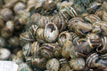 Bag of snails in shells in green plastic mesh Royalty Free Stock Photo