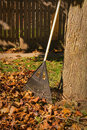Bagging fall leaves working in yard raking Royalty Free Stock Image