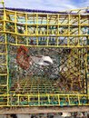Bait bag a in a metal lobster trap Royalty Free Stock Photos