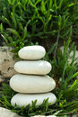 Balance in rock garden white pebble stones and green succulent Royalty Free Stock Photography