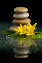 Balancing zen stones on black with yellow flower Royalty Free Stock Photo