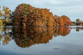 Bald cypress in automn french countryside lake with reflections Stock Photos