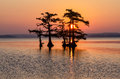 Bald Cypress trees, Reelfoot Lake, Tennessee State Park Royalty Free Stock Photo