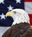 Bald Eagle and American Flag Royalty Free Stock Images