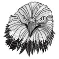 Bald eagle head as usa symbol for mascot or emblem design such a logo bird vector illustration t shirt sketch tattoo Royalty Free Stock Photography