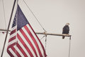 Bald eagle on a mast with flag sits next to an american looks peaceful Stock Photo