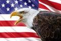 Bald eagle and USA flag Royalty Free Stock Photo