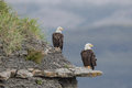 Bald Eagles. Royalty Free Stock Photo