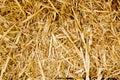 Bale Golden Straw Texture Rumi...