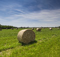Bale of hay in a cultivated field Stock Photography