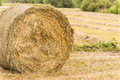 Bale of hay drying in the sun Royalty Free Stock Photography