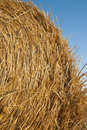 Bale of straw Stock Image