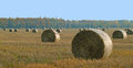 Bales of hay after harvest on field Stock Photo