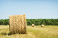 Bales of hay in a large field nature composition Royalty Free Stock Photography