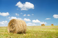 Bales of hay in a large field nature composition Stock Photography