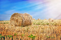 Bales of straw in the field hay Stock Photography