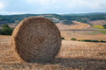 Bales of straw in the wheat fields harvested Stock Photos