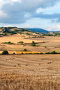 Bales of straw in the wheat fields harvested Stock Image