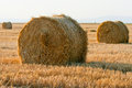 Bales of wheat straws (Triticum spa) at sunset Royalty Free Stock Image