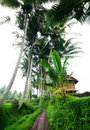 Bali rural scenic view with farmer hut Stock Photography