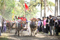 Bali traditional cow race the buffalo racing events indonesia routine held every year in jembrana district Stock Images