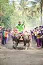 Bali traditional cow race the buffalo racing events indonesia routine held every year in jembrana district Royalty Free Stock Image