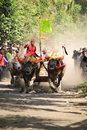 Bali traditional cow race the buffalo racing events indonesia routine held every year in jembrana district Stock Photography
