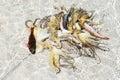 Balinese Fisherman`s catch