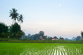 Balinese village rice field and traditional at dusk on bali island indonesia Stock Photography
