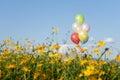 balloon multi color in yellow flower field blue sky