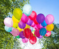 Balloons, sky and tree Royalty Free Stock Photo