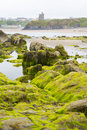 Ballybunion castle algae covered rocks view seaweed with and cliffs on beach in county kerry ireland Royalty Free Stock Photography