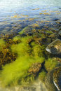 Baltic coast summer algae Royalty Free Stock Image