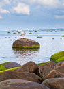 Baltic sea coastline of the estonia Stock Photos