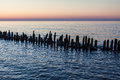 Baltic sea groynes on shore of the Stock Image