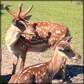 Bambi deer cute animal in the reserve Royalty Free Stock Photos