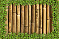 Bamboo background with green plant border Stock Photos