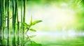 Bamboo Background - Lush Foliage With Reflection Royalty Free Stock Photo
