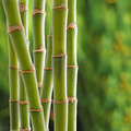 Bamboo backgroung Royalty Free Stock Photography